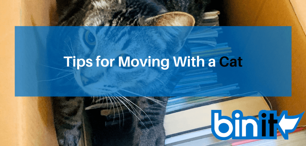 Tips for Moving With a Cat